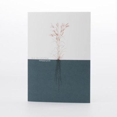 Big Bluestem Greeting Card