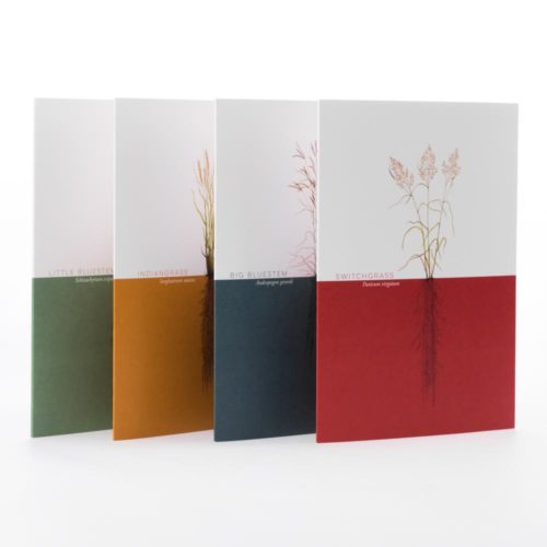 Prairy Grasses Greeting Cards