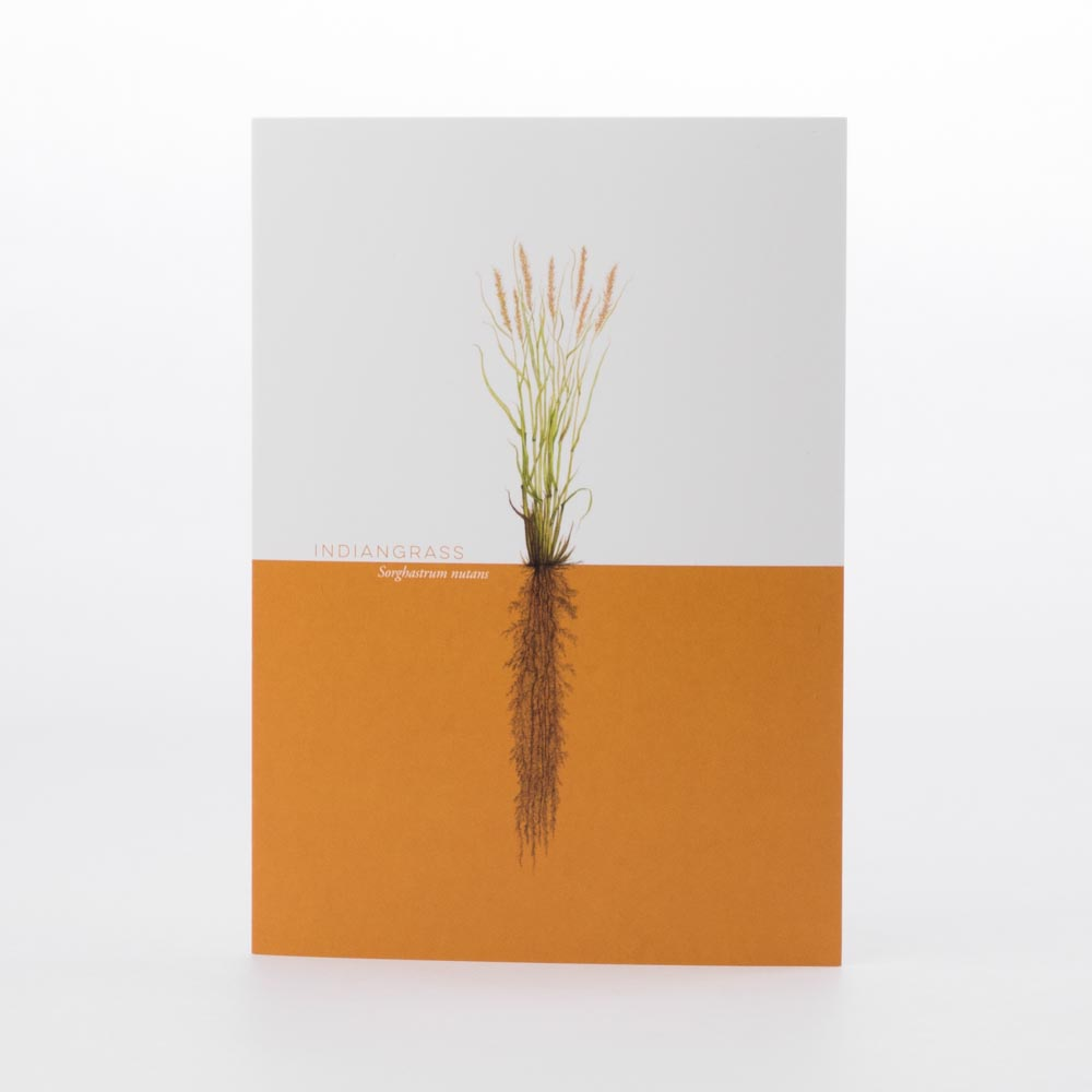 Indiangrass Greeting Card