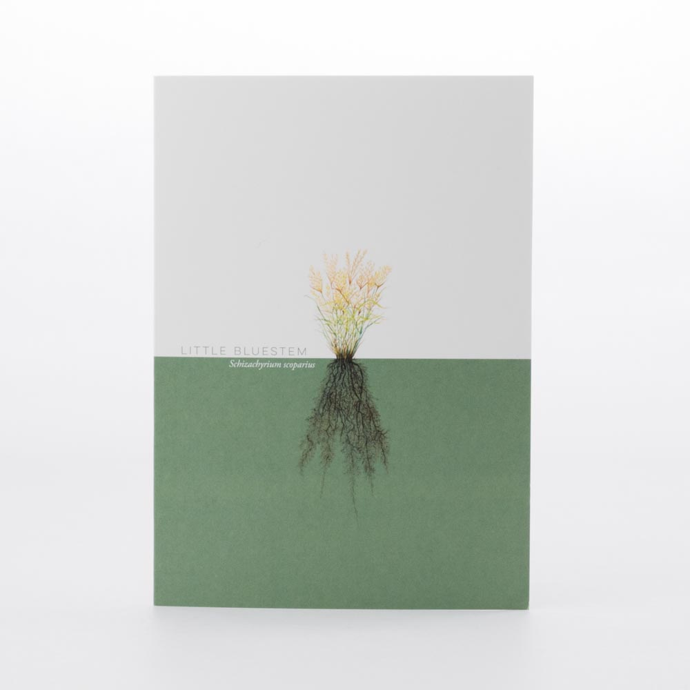 Little Bluestem Greeting Card