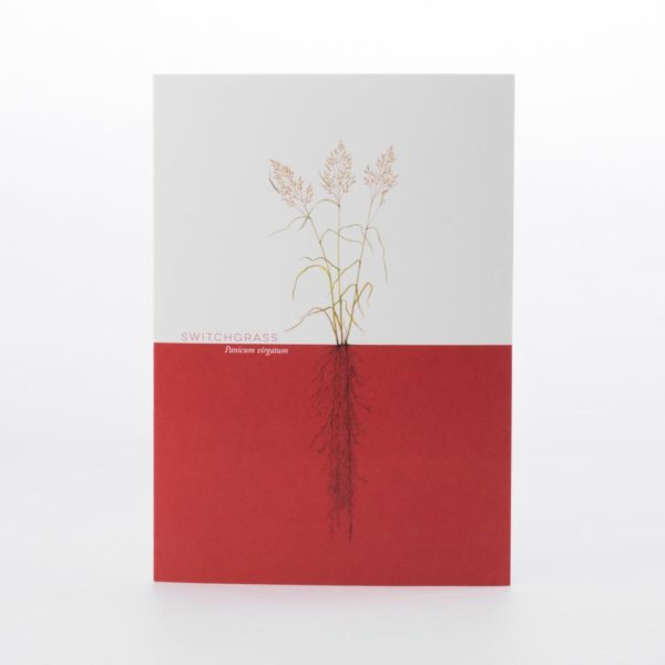 Switchgrass Greeting Card